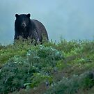 Black Bear in the Woods by David Friederich