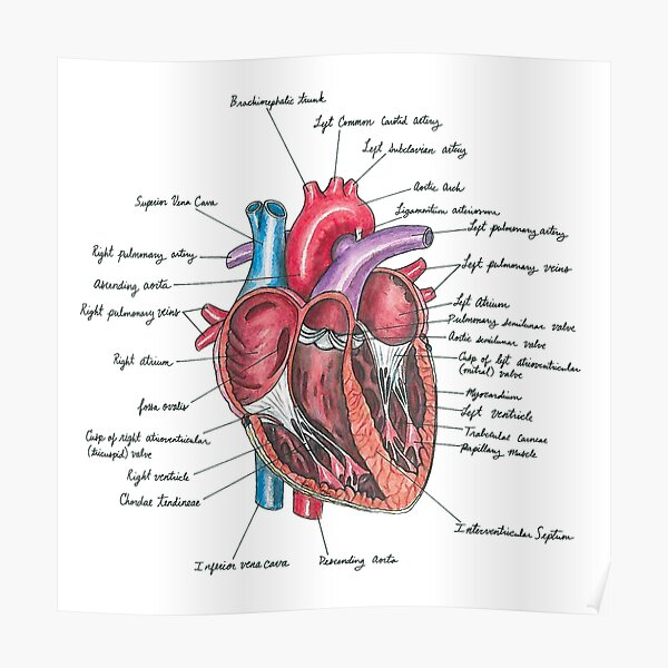 Healthy Heart Poster