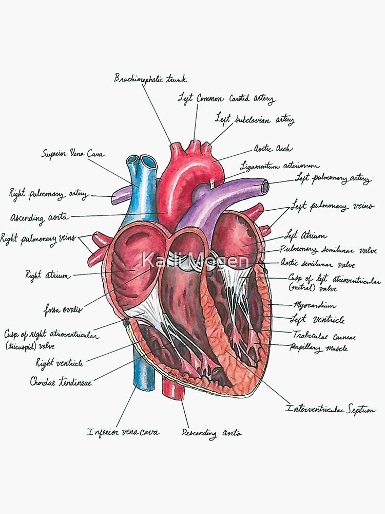 Healthy Heart by KMogen5