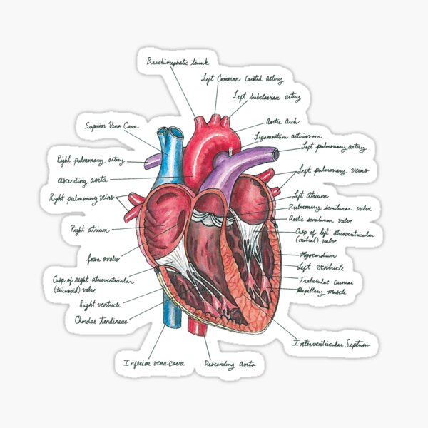 Healthy Heart Sticker