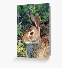 Cottontail Greeting Card