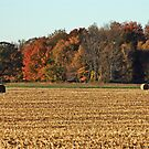 Autumn in the country by cherylc1