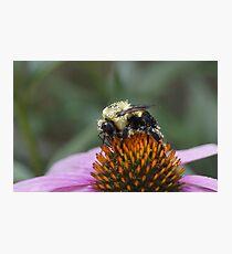 Pretty in Pollen Photographic Print