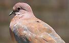 Like a dove...  by Elizabeth Kendall