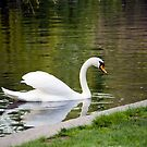 The Swan by Monica M. Scanlan