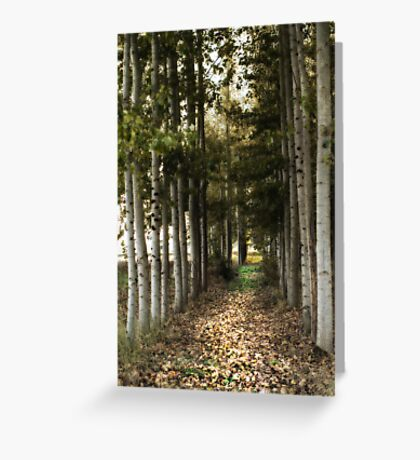 Afternoon Stroll Greeting Card