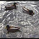 Dublin Ducks by TysieTootsie