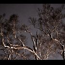 The starkness of night by scottsphotos