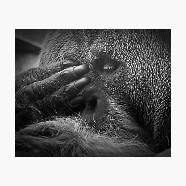 See No Evil Photographic Print
