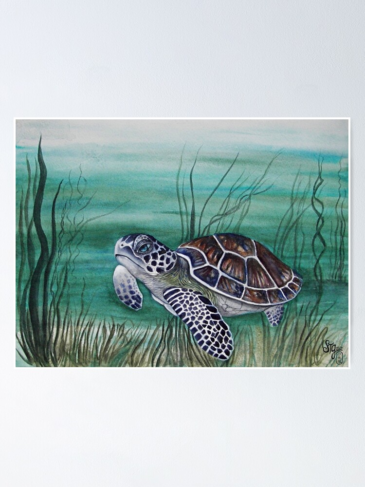 Alternate view of Hawksbill Sea Turtle Poster