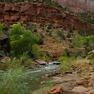 The Virgin River by jeffrae