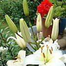Lillies in a Garden by Journeysinphoto
