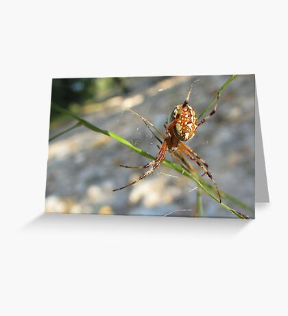 Marbled Orb-weaver Greeting Card
