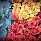 Kale and Mums by Judi FitzPatrick
