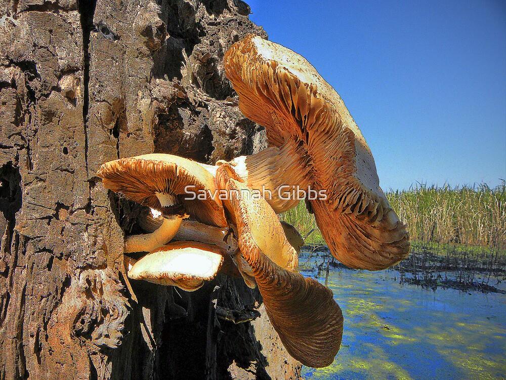 Mushrooms by Savannah Gibbs