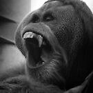 Orangutan by Jon Staniland