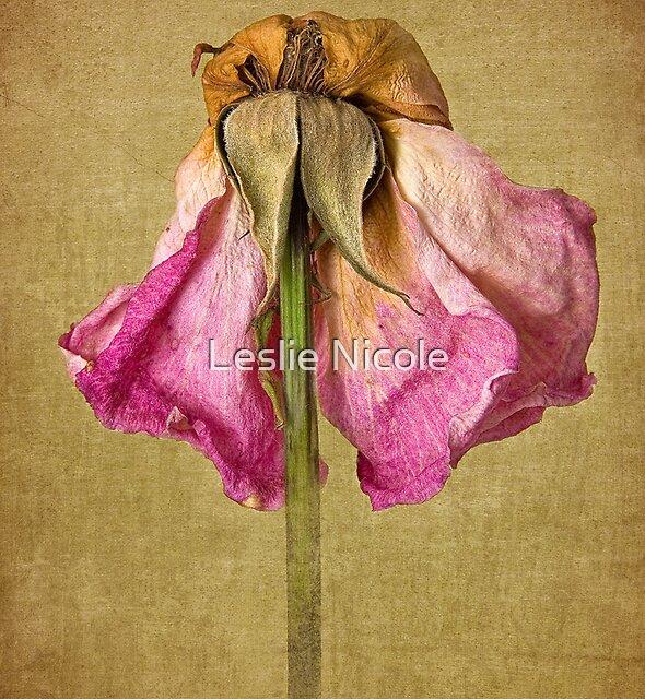 Vintage Petal Petticoat by Leslie Nicole