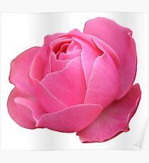 Leonardo da Vinci Rosa [2] Poster