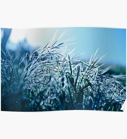 Blue Grass Afternoon Poster