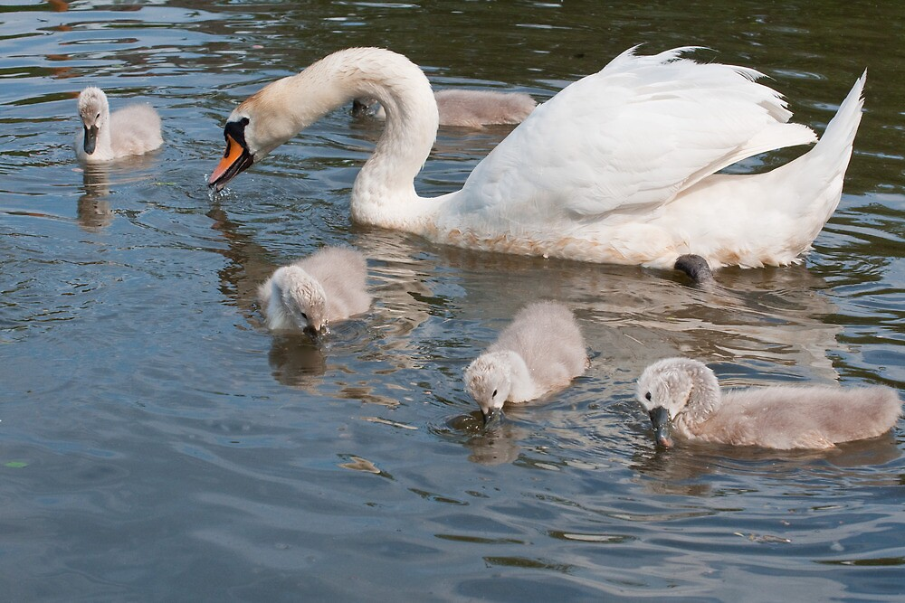 Mama Swan and Babies by Ann Miller