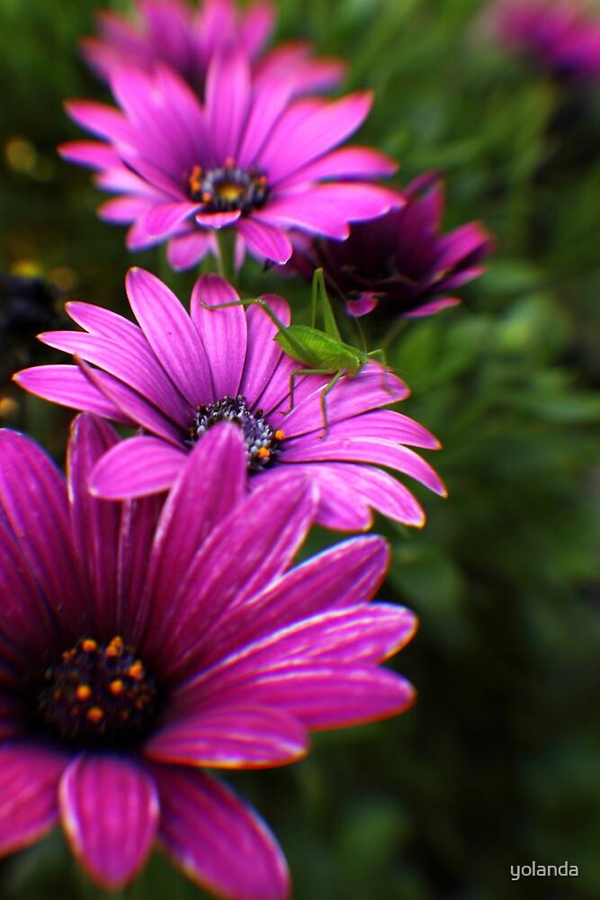In my Garden 2 by yolanda