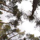 Trees in Dunwich Forest by shutternutter