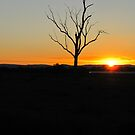 Sunset Special Sights by JacquieDuncan