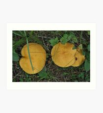 A Pair of Yellow Toadstools. Art Print
