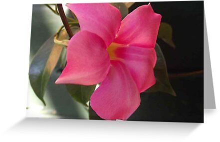 Pink Trumpet Flower On The Vine Greeting Cards By Carol Appelbee