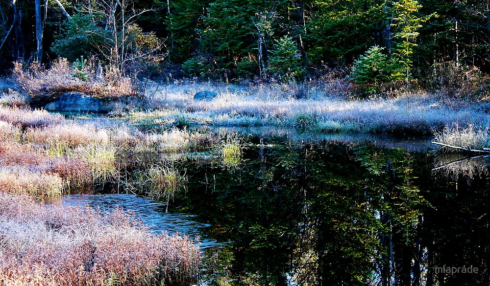 frosty swamp by mlaprade