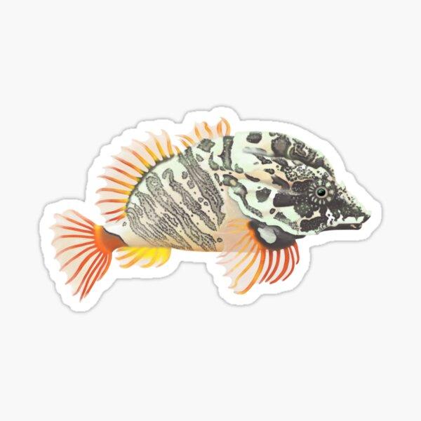 Grunt Sculpin (Rhamphocottus richardsonii) Sticker