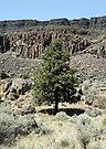 Lonesome Pine by Dave Davis