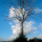 Tree of Life by Blake Steele
