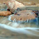 Bull Creek by Scott Chambless