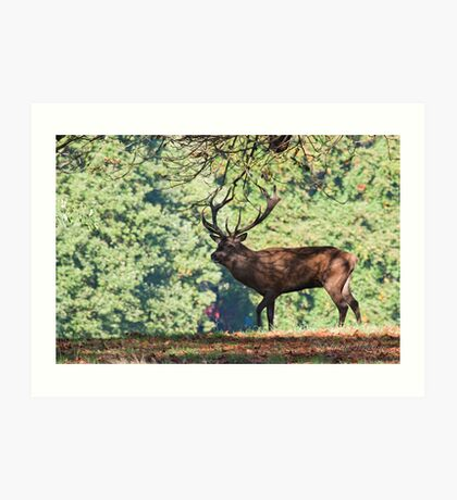 Stag in the tree's Art Print