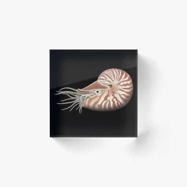 Chambered Nautilus Acrylic Block