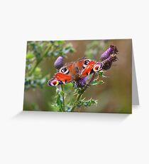 Peacock Butterfly ( Inachis IIo) on wild thistle by the River Tees, Northern England.  Greeting Card