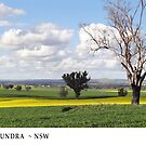 Spring at Cootamundra #1 by Rosalie Dale