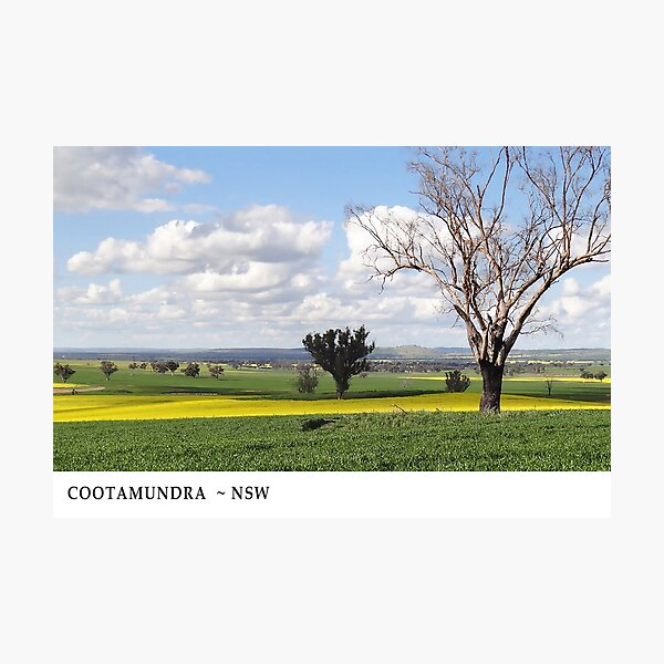 Spring at Cootamundra #1 Photographic Print