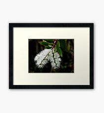 White Bottle Brush Bloom Framed Print