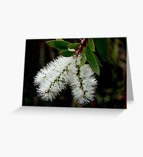 White Bottle Brush Bloom Greeting Card