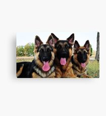 3 GSDs Canvas Print