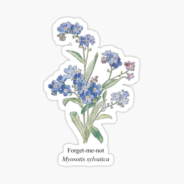 Forget-me-not Flower Sticker