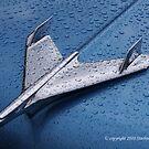 Rainy Blue Bird by starlitewonder