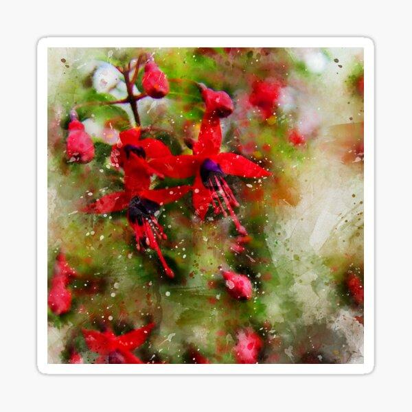 Fuchsia magellanica Sticker