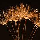 Golden Dandelions by Barb Leopold
