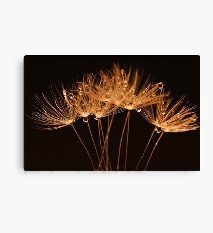 Golden Dandelions Canvas Print