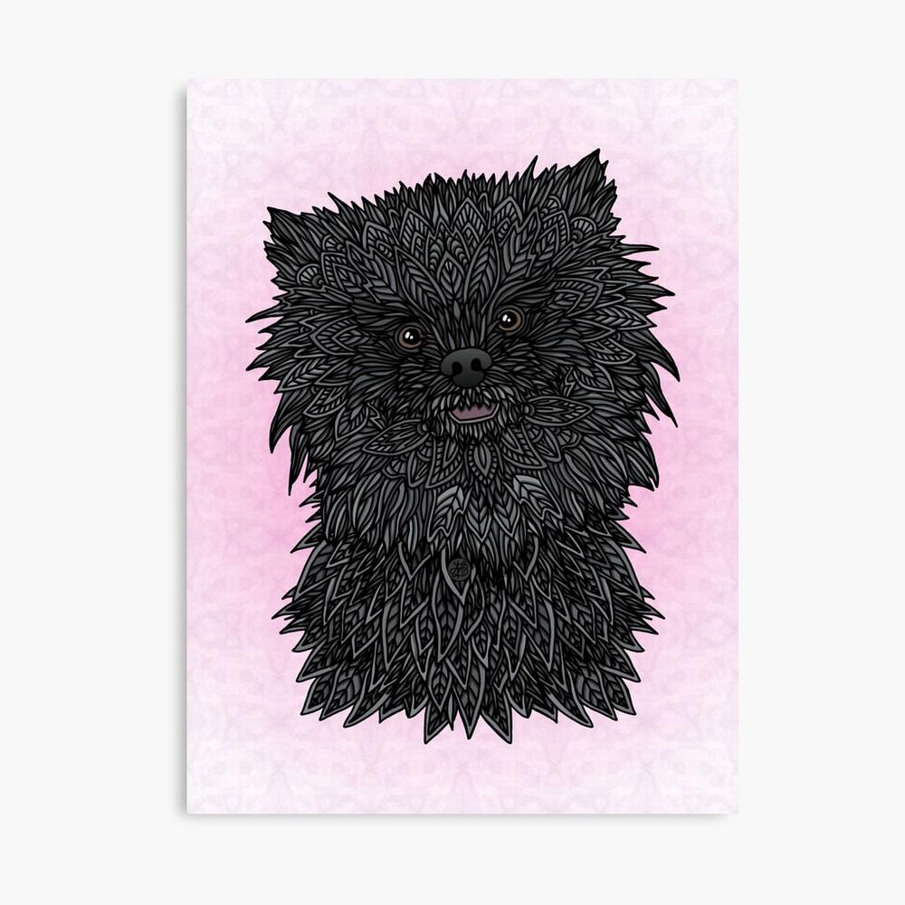 Black Pomeranian Canvas Print