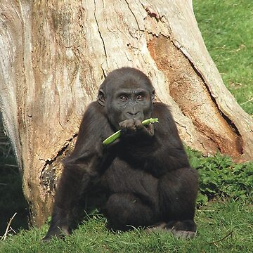 Baby Gorilla by dizzyg