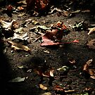 natures litter by Jeff stroud